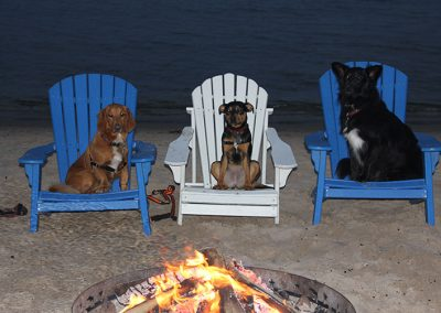 Dogs enjoying the campfire